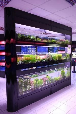 illustration : AQUAFEELING : nouveau concept de bac � plantes en agencement d'animaleries